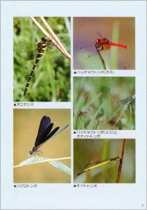 伊那谷の昆虫 ガイドブック2