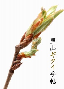 s-里山ギタイ手帖1-4p(新)-1