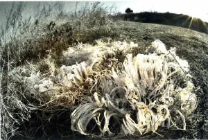 s-平元盛親20150129「一番冷え込む1月の末霜柱も生きもののよう」009