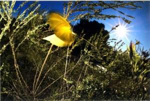 s-平元盛親20141106「冬近チョウの命も尽きようとしている」007