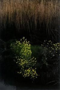 s-平元盛親20150416「春のおとずれを感じる」002